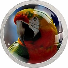 Glass Cabinet Knobs Coloured Parrot with 3D Visual