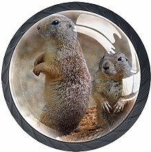 Glass Cabinet Knobs Cute Groundhog with 3D Visual