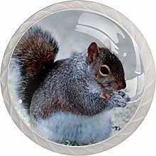 Glass Cabinet Knobs Cute Squirrel with 3D Visual