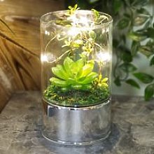 Glass Tube Terrarium - Artificial Succulents and