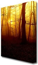 Golden Forest At First Light Forest Canvas Print