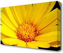 Golden Yellow Daisy Flowers Canvas Print Wall Art