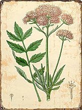 Graman Valerian Flower Wall Print| Botanical Wall