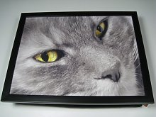 Grey Cat Yellow Eyes Kitty Face Cute Cushioned