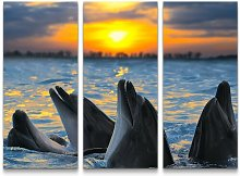 Group of Dolphins at Sunset Photographic Art Print