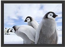Group of Emperor Penguins Framed Photographic Art