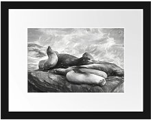 Group of Sea Lions in a Bay Framed Photographic