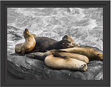 Group of Sea Lions on a Bay Framed Graphic Art
