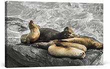 Group of Sea Lions Photographic Art Print on