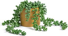Habitat Artificial Faux Floral Trailing in Pot - Mustard