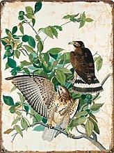 Hawk Print, Antique Bird Painting, Vintage Drawing