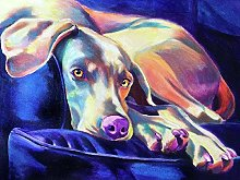 HCDZF DIY Paint by Numbers for Adults Weimaraner