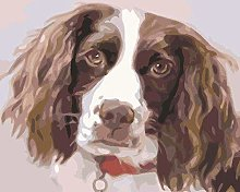 HCDZF Paint By Numbers Adult Animal Gray Springer