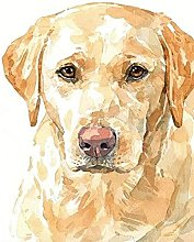 HCDZF Paint by Numbers for Adult Golden Labrador