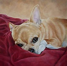 HCDZF Paint by Numbers for Adults Chihuahua Lying