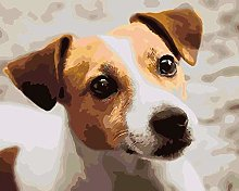HCDZF Painting Number for Adults - Jack Russell