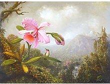 Heade Orchid Hummingbird Mountain Waterfall