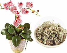 hehsd0 Sphagnum Moss 6L 12L Flower Organic