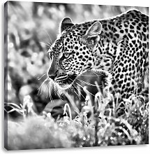 Hunting Leopard Photographic Art Print on Canvas
