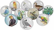 IBA Indianbeautifulart Multicolor Mix Bird Round 2