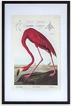 John James Audubon - American Flamingo Framed