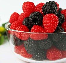 JUSTDOLIFE 24PCS Artificial Fruit Lifelike