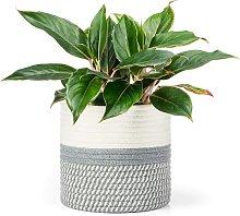 Jute Cotton Rope Plant Basket Mini Woven Storage