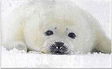 Kanaite Harp Seal Pups Funny Animal Decor Non-Slip