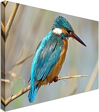 Kingfisher, beautiful blue 20x30 inches   Canvas