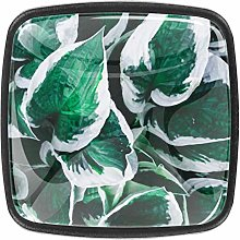 Kitchen Cabinet Knobs - Green Leaves Nature -