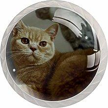 Kitchen Cabinet Knobs - Orange cat Kitten - Knobs