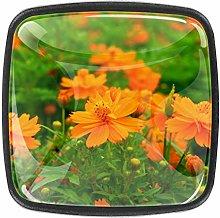 Kitchen Cabinet Knobs - Orange Cosmos Flower -
