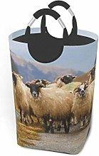 Laundry Hamper Flock Of Scottish Blackface Sheep