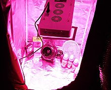 LED Grow Tent Kit - Complete LED Indoor Growing