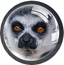 Lemur Cabinet Knobs Pack of 4 with Stainless Steel