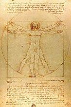 Leonardo Da Vinci Vitruvian Man Drawing Sketch