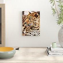 Leopard on Alert Photographic Print Big Box Art