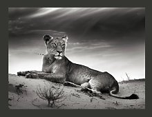Lioness in Black and White 1.93m x 250cm Wallpaper