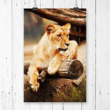 Lioness Lion Photographic Print Big Box Art