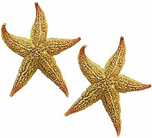 LPxdywlk 2Pcs Natural Dried Starfishes Sea Star