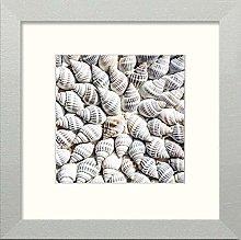 Lumartos, Shells Contemporary Home Decor Wall Art