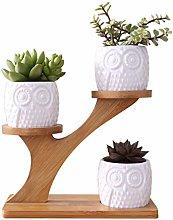 luosh Cute Owl Pot Cactus Plant Pot Succulent
