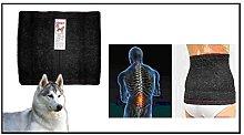 Ceinture médicale de chien en laine traite la sciatique, bas du dos