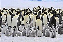 MKmd-s 1000 piece jigsaw puzzle penguin animal