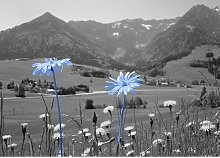 Mountain Flowers Photographic Print East Urban