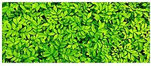 MPGIO Stair Treads Plant Printing Stair Mats for