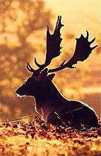 N\A For Kid Adult Toy Gift Puzzle - Deciduous Elk