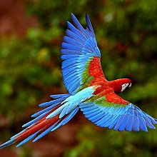 NHJC Paintings on Canvas,Colored parrot,Canvas