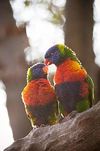 NHJC Paintings on Canvas,Colorful parrot,Canvas