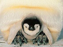 NHJC Paintings on Canvas,Cute penguin,Canvas Wall